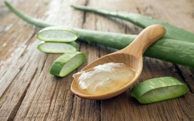 What Makes Aloe Vera a Wonder Plant?